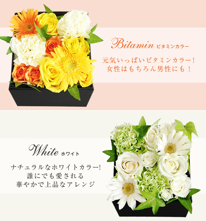 BOXアレンジ ビタミン、ホワイト紹介