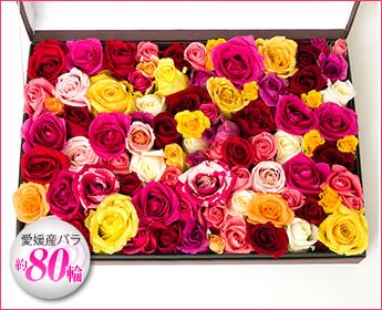 香りの薔薇が30輪以上入った高級ローズバス